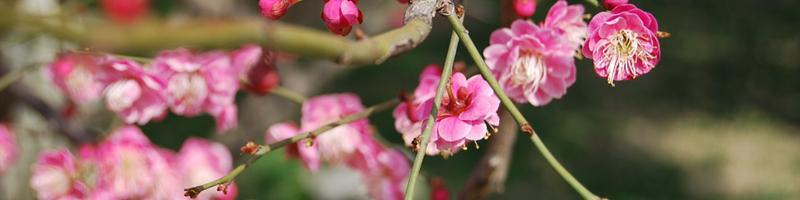 Spring Flowers In Japan Kay Me